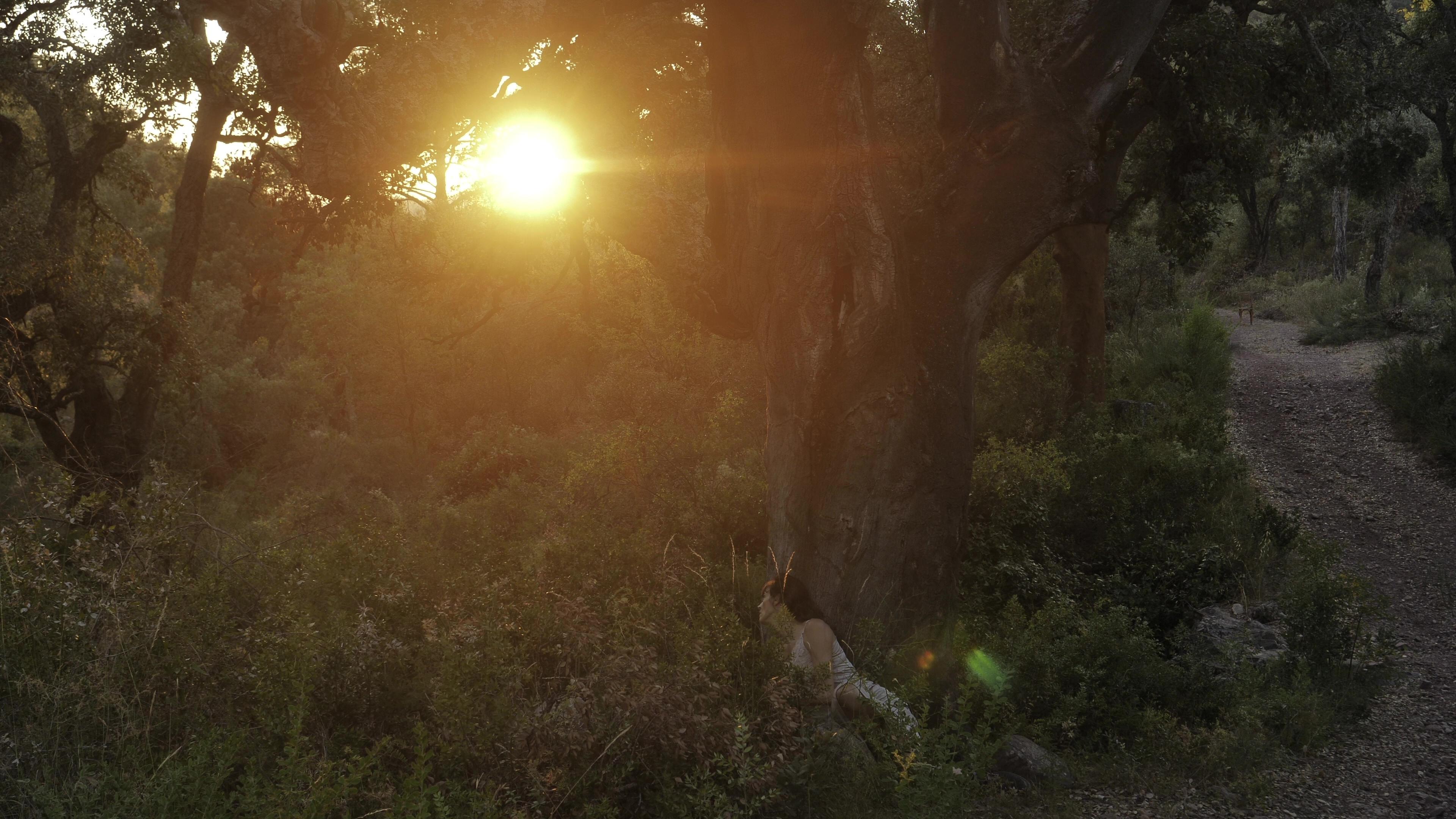 Sehnsuchtsdämmerung – El ocaso del anhelo